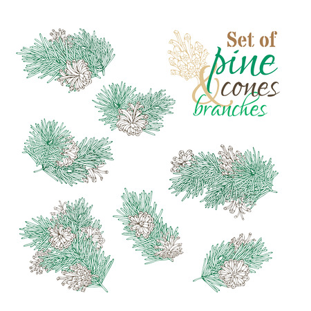adorn: Vector set of pine branches, cones and needles. Outlined design elements for invitation, card, banner isolated on white background. Christmas festive nature illustration. Illustration