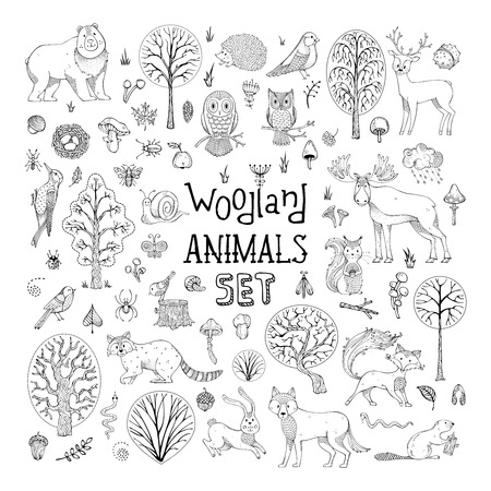 Hand-drawn collection for children colouring books, invitations, cards and posters. Deer, fox, hedgehog, owl, hare, raccoon, snail, squirrel, bee, mushroom, tree. Illustration