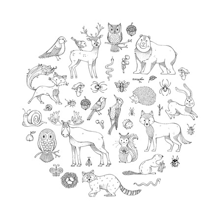 Hand-drawn fox, wolf, owl, hare, squirrel, moose, deer, bear, raccoon, hedgehog and other mammals and birds. Autumn seeds, leaves, mushrooms.