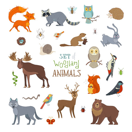 Vector set of woodland animals made in cartoon style. Cute animals isolated on white background. Moose, bear, fox, wolf, deer, owl, hare, squirrel, raccoon, hedgehog and other mammals and birds.