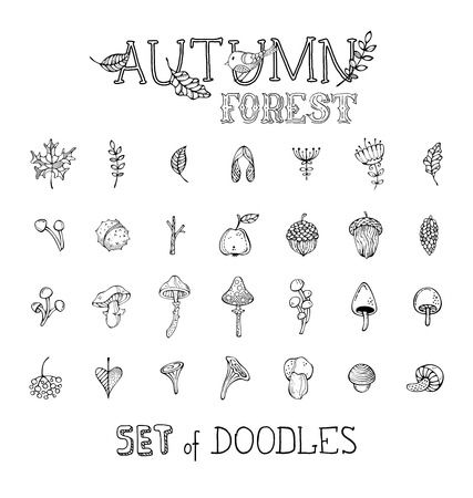 Mushrooms, acorns, fly agaric, chestnut, chanterelles, apple, rowan berries, flowers, autumn leaves and maple seeds. Can be used in colouring book.