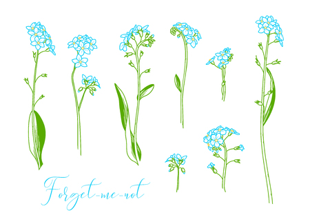 Vector linear colored illustration of woodland flower isolated on white background. Some variations.