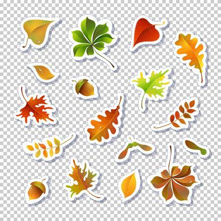 Ensemble d'illustrations vectorielles de feuilles d'automne. Autocollants de feuillage isolés sur fond transparent. Pack de dessins de feuilles vertes, rouges et jaunes. Composition botanique. Collection de frondaisons Vecteurs