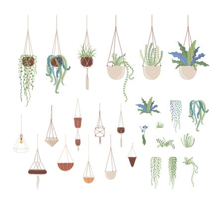 Domestic plants and hanging pots flat vector illustrations set. Clay flowerpots on ropes, interior design elements pack. Greenery, domestic flowers, houseplants collection isolated on white background