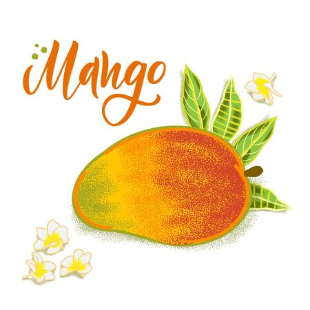 Hand drawn textured mango, flowers and leafs.  Colorful food illustration for healthy food cafe, restaurant, fruits and grocery market Stock Illustratie