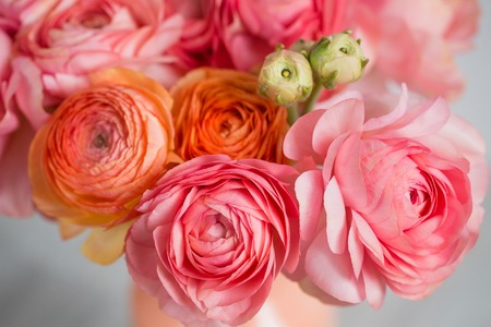 bunch of pale pink ranunculus persian buttercup light background, wooden surface. glass vase.  spring, summer Stockfoto