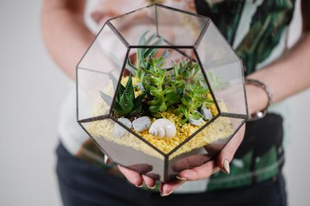 sostenibilidad: Florarium Jarrón de cristal con planta suculenta. Planta suculenta de cactus en miniatura en un florero de cristal