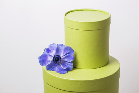 plastered wall: two hat box pistachio color against the plastered wall. Flower Poppy anemone purple gradien.