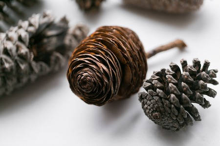 Pine cone set different views on white. Stock Photo