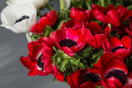 Close-up van een witte en rode papaversanemonen in vaas. Veel bloemen - grijze achtergrond. winter bloem Stockfoto - 76058887
