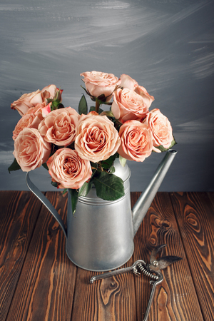 cappuccino roses in Watering-can. Garden pruner on the worn wooden surface. Stock Photo