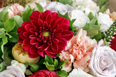 red dahlias. beautiful bouquet made of different flowers on grey background. colorful color mix flower. close-up Stock Photo