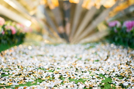 Green Spring and Summer sparkle nature park bokeh background