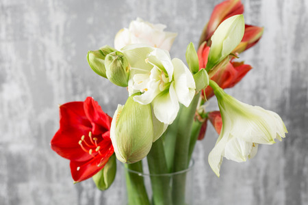 Winter flowers. Amaryllis in a vase watering can standing on a wooden table. On the background old gray wall art. Stockfoto