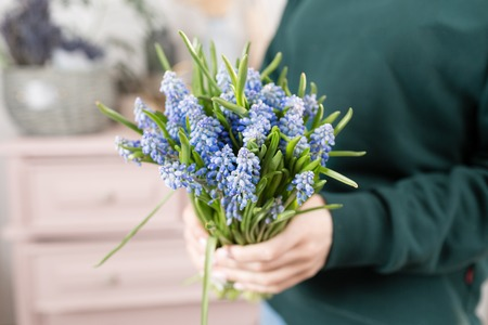 Beautiful spring flower bouquet. Delicate female hands holding a holds blue muscari flowers. Pink chest of drawers in the background. Flower shop, a family business.