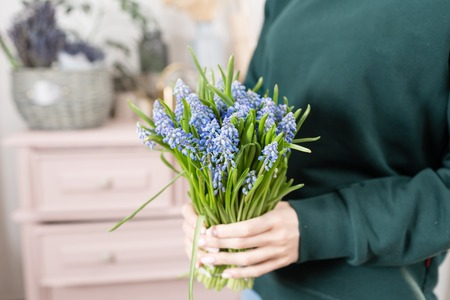 Beautiful spring flower bouquet. Delicate female hands holding a holds blue muscari flowers. Pink chest of drawers in the background. Flower shop, a family business