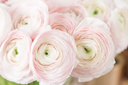 Persian buttercup. Bunch pale pink ranunculus flowers light background. Glass vase on pink vintage wooden table. Wallpaper Foto de archivo