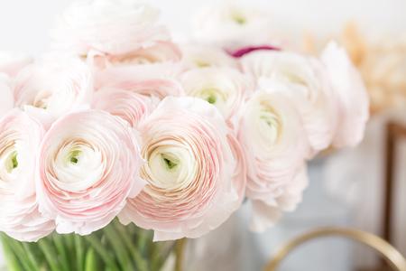 Persian buttercup. Bunch pale pink ranunculus flowers light background. Glass vase on pink vintage wooden table. Wallpaper Stock Photo
