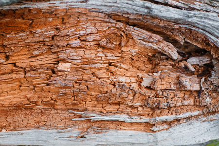 Old rough wood texture. Wooden . Forest background.