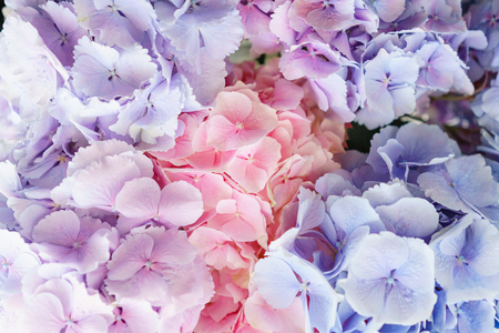 beautiful hydrangea flowers in a vase on a table . Bouquet of light blue, lilac and pink flower. Decoration of home. Wallpaper and background Archivio Fotografico