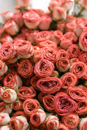 Roses. Lots of buds. Floral natural backdrop. Flower shop concept Archivio Fotografico