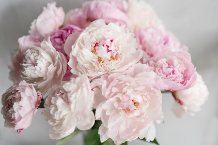 Cute and lovely peony. many layered petals. Bunch pale pink peonies flowers light gray background. Wallpaper, Vertical photo Stock Photo