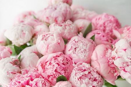 Wallpaper. Lovely flowers pink peonies . Floral compositions, daylight.