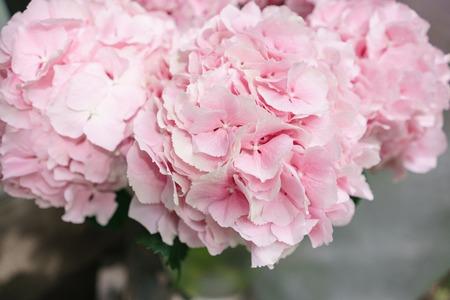 Light Pink Hydrangea Flowers In Vase On Wooden Table Beautiful