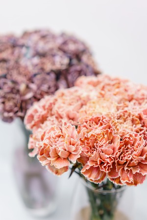 Bouquet of carnation flowers coral and peach color. Spring background. Clove bunch present for Mothers Day.