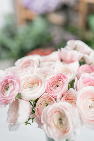 Ranunculus asiaticus or Persian Buttercup. Bunch of pastel pink blossom . Light gray background, glass vase. Wallpaper, flowers texture