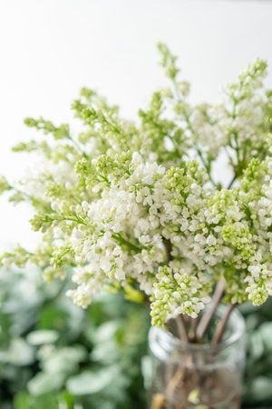 Bunch white lilac in glass vase. Bouquet flowers on light background. Wallpaper. Spring flowering trees
