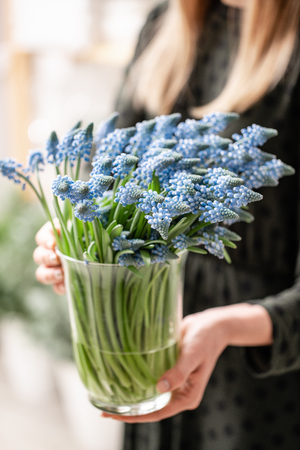 Bouquet of blue muscari flowers in glass vase in woman hands. Spring bulbous flowers. Flower shop concept