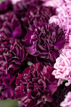 beautiful carnations flowers in a vase on a table . Bouquet of dark violet, purple and pink multicolor flower. Decoration of home. Floral texture, Wallpaper.