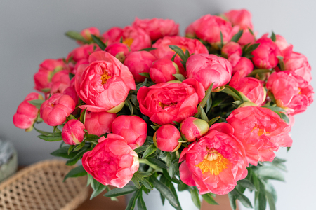 Coral peonies in a metal vase. Beautiful peony flower for catalog or online store. Floral shop concept . Beautiful fresh cut bouquet. Flowers delivery