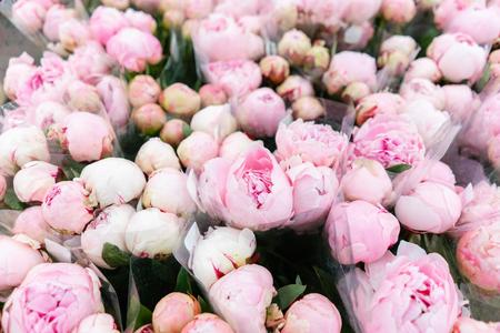 Lagerkühlschrank, Großhandel mit Blumen für Blumengeschäfte. Rosa Pfingstrosen in einem Plastikbehälter oder Eimer. Online-Shop. Blumenladen und Lieferkonzept.