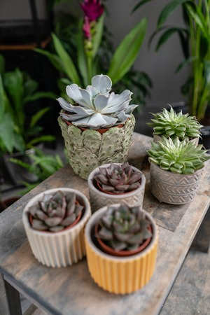 Collection of succulents in stylish ceramic pots on the wooden table. Minimalistic home interior with composition of cactus and succulents . Stylish concept of home garden.