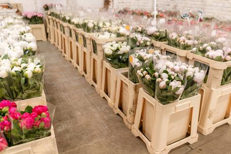 Magazijn koelkast, Groothandel bloemen voor bloemenwinkels. Witte pioenrozen in een plastic bak of emmer. Online winkel. Bloemenwinkel en leveringsconcept. Stockfoto