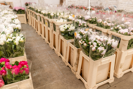 Warehouse refrigerator, Wholesale flowers for flower shops. White peonies in a plastic container or bucket. Online store. Floral shop and delivery concept. 版權商用圖片 - 123137928