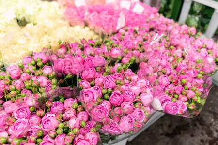 Warehouse refrigerator, Wholesale flowers for flower shops. Pink roses in a plastic container or bucket. Online store. Floral shop and delivery concept.