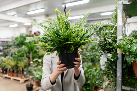 A young woman holding a Nephrolepis plants, fern, chooses a plant for the house. Hiding behind him. Many different plants in flower pots in flowers store. Garden center and wholesale supplier concept. Standard-Bild