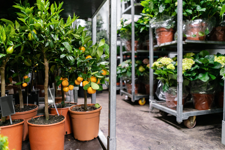 Many different plants in flower pots in flowers store. Garden center and wholesale supplier concept. Green background. Lots of leaves.