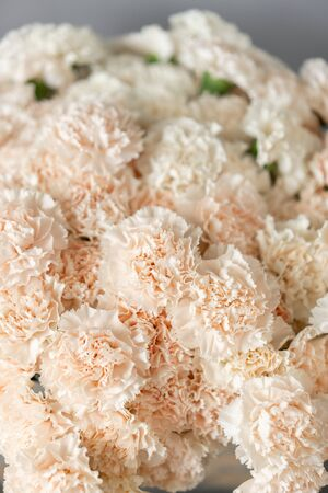 Bouquet of carnation flowers white pale pink color. Spring background. Clove bunch present for Mothers Day.