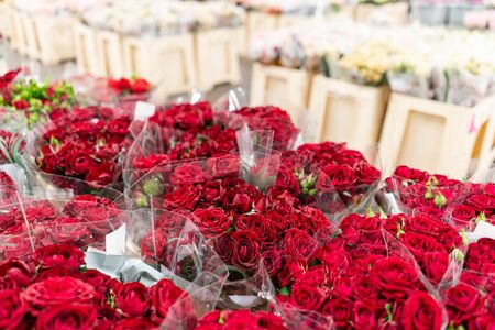 Warehouse refrigerator, Wholesale flowers for flower shops. Red roses in a plastic container or bucket. Online store. Floral shop and delivery concept