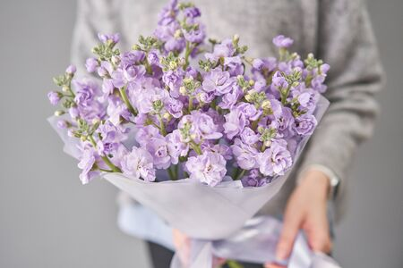 Spring floral. Fresh A bouquet of lilac Mattioli close up. Womens or Mothers Day Theme. Fresh cut flower.