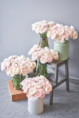 many layered petals. Persian buttercup. Bunch pale pink ranunculus flowers light background. Banco de Imagens