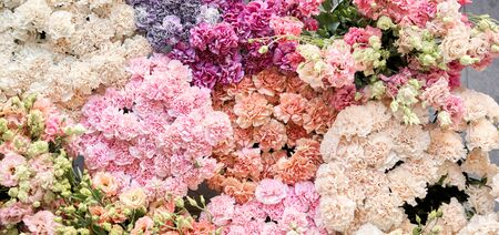 Floral carpet or Wallpaper. Background of mix of flowers. Beautiful flower for catalog or online store. Floral shop and delivery concept. Top view. Copy space Stock Photo