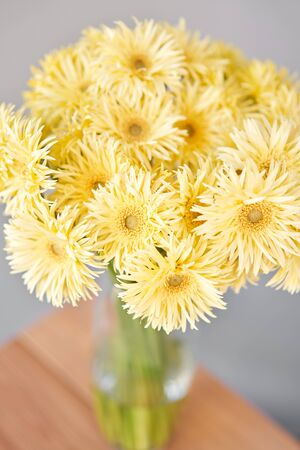 Beautiful flower composition. Sunny yellow gerbera flower heads in glass vase. Floristry concept. Spring colors Standard-Bild - 149890667