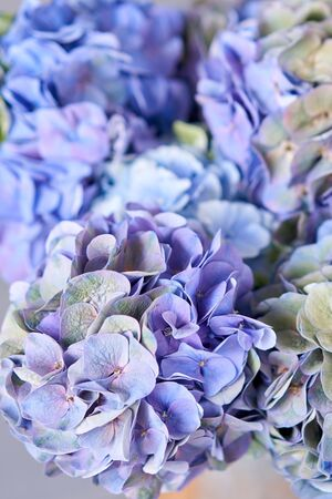Beautiful blue hydrangea flowers in a vase on a table . Bouquet of light pink flower. Decoration of home. Wallpaper and background. Standard-Bild - 150162514
