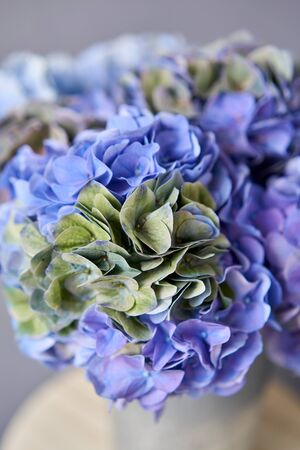 Beautiful blue hydrangea flowers in a vase on a table . Bouquet of light pink flower. Decoration of home. Wallpaper and background. Standard-Bild - 150162515