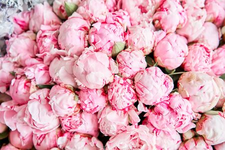 Floral carpet or Wallpaper. Background of mix of flowers. Beautiful flowers for catalog or online store. Floral shop and delivery concept. Top view. Copy space Standard-Bild - 150162527